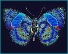 Solarized Butterfly (Birds&More) Tags: butterfly