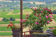 48 - Luberon - Roussillon, le village de l'Ocre (paspog) Tags: ocre roussillon village dorf provence france august août 2018