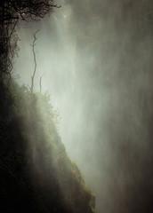 Standing (Paul Cronin 1) Tags: appictureoftheweek 100400lmk2 canon canon5ds eerie mist noise thesmokethatthunders tree victoriafalls water waterfalls zimbabwe 100400l mk2