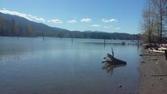 Alder Lake, Wa (blogginandmommin) Tags: water lake trees driftwood alderlake familyfun clouds blue green brown