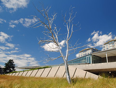 Stainless Steel Tree. Olympic Sculpture Park, Seattle. (Infinity & Beyond Photography) Tags: stainless steel tree openair outdoor art exhibit olympic sculpture park seattle bluesky sky building grass