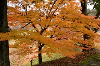Autumn in Gifu