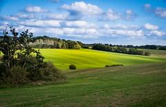 Countryside (Maria Eklind) Tags: view sensommar landscape nature himmel sweden outdoor clouds countryside summer skåne road sky green moln landskap gråmanstorp latesummer klippan skånelän sverige se grass field tree träd