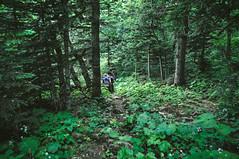 DSC_0107 (Hilðr) Tags: mountains trees rocks forest woods view horizon canyon hills pine stones moss norse inspiration spirit hiking dark