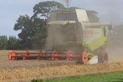 Claas Lexion 570 Combine Harvester cutting Winter Wheat (Shane Casey CK25) Tags: claas lexion 570 combine harvester cutting winter wheat shannagarry grain harvest grain2018 grain18 harvest2018 harvest18 corn2018 corn crop tillage crops cereal cereals golden straw dust chaff county cork ireland irish farm farmer farming agri agriculture contractor field ground soil earth work working horse power horsepower hp pull pulling cut knife blade blades machine machinery collect collecting mähdrescher cosechadora moissonneusebatteuse kombajny zbożowe kombajn maaidorser mietitrebbia nikon d7200
