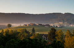 Black Forest Morning