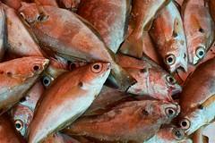 Fish eyes (pan_orama) Tags: marokko maroc morocco essaouira beach harbour seagulls fish sun color travel