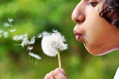 Make a wish ! (surer2) Tags: weed a77 oregon sigma sony dandelion wish nature children