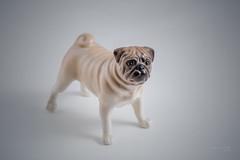 pug (porcelain) (Taema) Tags: pug figurine