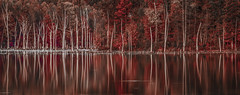 Muscatatuck Reflections (Bernie Kasper (4 million views)) Tags: art berniekasper fall red raw nature landscape light water reflections colours colors naturephotography indiana southernindiana musctatucknwr travel family new old outside outdoor hiking usa unitedstates photography