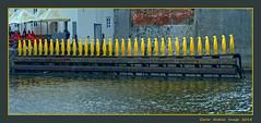 All in a row (cienne45) Tags: prague praga praha pinguino penguins pinguini attesa fila filaindiana row waiting moldava river moldavariver