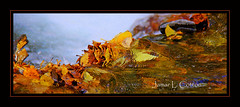 Autumn Leaves. Moments in the Inyo National Forest (**Jamar**) Tags: autumn autumncolors autumnleaves