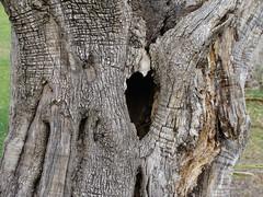 Corazón seco (Manuisla) Tags: manuisla manu árbol corazón seco parque soledad isla naturaleza silencio camino fotografia afición tree heart