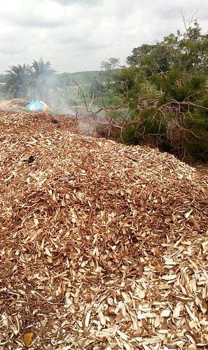 Accumulation of peels left at an unofficial dump