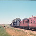11.10.1969 Wilmington line - South Australia locos SAR T240 + T251 on ARHS special Farewell to Narrow Gauge (mb-s005-11)