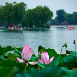Lotus lane, Beihai lake, Beijing thumbnail