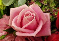 Pink rose (M-Gang) Tags: roses flowers flower bouquet smallflowers blooms