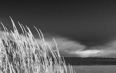 Vuelta por el universo (.KiLTRo.) Tags: puntaarenas regióndemagallanesydelaan chile regióndemagallanesydelaantárticachilena cl kiltro hierba nature sky clouds sea patagonia straitofmagellan water ocean