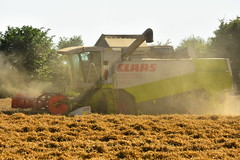 Claas Lexion 440 Combine Harvester cutting Winter Wheat (Shane Casey CK25) Tags: claas lexion 440 combine harvester cutting winter wheat midleton grain harvest grain2018 grain18 harvest2018 harvest18 corn2018 corn crop tillage crops cereal cereals golden straw dust chaff county cork ireland irish farm farmer farming agri agriculture contractor field ground soil earth work working horse power horsepower hp pull pulling cut knife blade blades machine machinery collect collecting mähdrescher cosechadora moissonneusebatteuse kombajny zbożowe kombajn maaidorser mietitrebbia nikon d7200