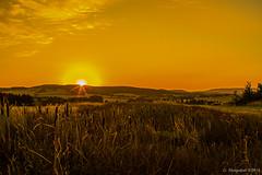 Lippische Landschaften- Sonnenaufgang über Istrup (günter mengedoth) Tags: samyang 35 mm f14 as umc samyang35mmf14asumc pentax pentaxk1 k1 manuell landschaft lippe istrup sonne sonnenaufgang schilf schilfkolben moor hochmoor