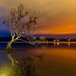 That Wanaka Tree-13 thumbnail