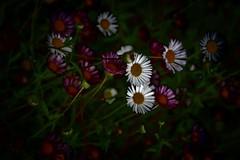 Late evening and flowers .. (Julie Greg) Tags: flower flowers colours canon nature nautre clouds details garden park england evening plant