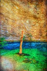 Water Tree (fs999) Tags: 100iso fs999 fschneider aficionados zinzins pentaxist pentaxian pentax k1 pentaxk1 fullframe justpentax flickrlovers ashotadayorso topqualityimage topqualityimageonly artcafe pentaxart corel paintshop paintshoppro 2018ultimate paintshoppro2018ultimate fontainedevaucluse vaucluse provence france irixblackstone15mmf24 irix irixlens blackstone 15mm f24 blackstone15mm ultra wide angle topaz labs texture effects 2 textureeffects textureeffects2 nano circular polarising filter slim ultraslim coating