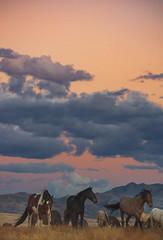 Wild Horses (Jami Bollschweiler Photography) Tags: wild horses onaqui herd utah sunset stallion foal mare gray roan filly running