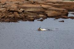 9-18-18 Fishers-4187 (spencer Hart Photography) Tags: raleigh 5dmkii 7 70200 northcarolina canon fishing