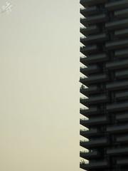 La pianta solitaria. Profili. Milano (diegoavanzi) Tags: milano milan italia italy sony hx300 bridge lombardia lombardy torre aria grattacielo skyscraper