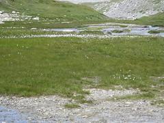 Rando 2018 (188) (Mark Konick) Tags: alpen alpes alpi alps backpacking bergsee bergtour bergwandern bivouac gebirge hiking lac lago lake markkonick montagnes mountains nathaliedeligeon randonnée trekking wandern italy italie italia italien france francia frankreich bouquetin ibex cabramontés stambecco steinbock chamois camoscio gamuza rebeco gams gämse gemse gämsbock gemsbock moutons sheep vaches vacas kühe mucche vacche cows cascade chuted'eau waterfall wasserfall cascata cascada saltodeagua