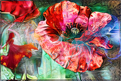 Poppystyle (PaulO Classic. ©) Tags: canon450d capetown googledeepdream glencairn ddg deepdream poppies poppy photoshop picmonkey