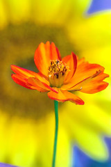 Summer Flowers (dianne_stankiewicz) Tags: flowers summer sunflower yellow orange nature plant