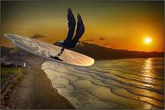 Bird's eye view (Zarauz beach) (Damaz Real Fantasy) Tags: zarauz playa beach tucan fantasyart daz3d landscape spain vasco arguiñano surf surfer table surfboard