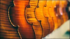 The string section (G. Postlethwaite esq.) Tags: dof lightroom sonya7mkii staffordshire viveza bokeh depthoffield fullframe mirrorless musicalinstrument selectivefocus stone violins