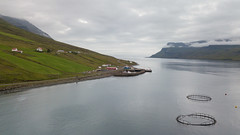 HS180802_12_Mjoifjordur_Iceland_Sue Forbes-3 (hilary225) Tags: aerial brekka church europe fjord flowers harebell iceland landscape mavic mjoifjordur people places village waterfall cottongrass harbour sheep zodiac