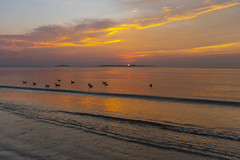 Birds & Sunrise (kmanoh) Tags: usa unitedstates america northamerica northeast newengland massachusetts ma suffolkcounty revere reverebeach beach city morning sun sunrise nikon d810 tamron seascape ocean massachusettsbay bay water blue clouds