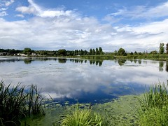 White Lake Reflections (jsiegelphotos) Tags: ecosystem wetlands sunny peaceful calm endofsummer green blue lakeshore nature water cloudscape clouds reflection lake