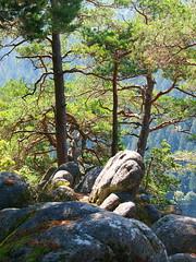 Auf dem Apfelfelsen (Schwarzwald) / on the apple-rock (Black Forest) (Olyshutterhand) Tags: ngc schwarzwald black forest apfelfelsen