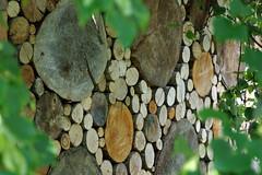 Puuriit (Jaan Keinaste) Tags: pentax k3 pentaxk3 eesti estonia puu tree puuriit küttepuu firewood