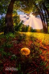 Shrooms (Vinny Giordano) Tags: sunburst d850 mushroom giordanophotography lakegeorge rokinon giordanophotos nikon clouds