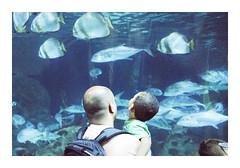 _K001793 (Jordane Prestrot) Tags: ♍ jordaneprestrot tenerife puertodelacruz loroparque aquarium acuario zoo desseincaptif captivedesign poisson fish pescado