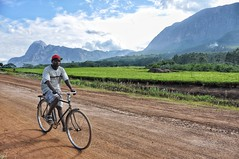 Cyclist beside Mount Mulanje and tea plantations.