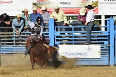 "Baker County Tourism – basecampbaker.com 47132 (Base Camp Baker) Tags: oregon ""easternoregon"" ""bakercountytourism"" basecampbaker ""basecampbaker"" ""bakercounty"" rodeo cowboys ""bakercitybroncandbullriding"" ""bakercity"" ""oregonrodeo"" ""minersjubilee"" oregonrodeo ramrodeo traveloregon travel tourism roughstock rodeolife bulls bullriding"