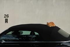 (Anne-Sophie Landou) Tags: mundane newtopographics annesophielandou animals street urban cat kitty car marseille minimal reflection littledoglaughedstories