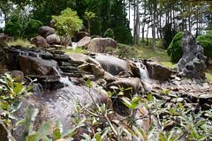 _DSC6462 (Quyr) Tags: dalat vietnam green smoke frog cloud tree forest langbiang lamdong portrait thunglungvang duonghamdatset