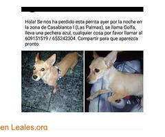 Golfa (Leales.org • tu guía animable) Tags: adopta adoptar adoptanocompres noalmaltratoanimal adopción sebusca extraviado perdido perro gatos lealesorg