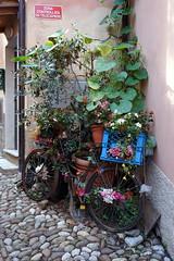 Sestri Levante (Georgie Kyriacou) Tags: sestrilevante italy bike bicycle flowers cobbles