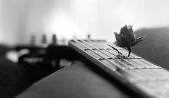 Where words fail, music speaks. (Kaitlyn June) Tags: blackandwhitephotography blackandwhite guitar music lovely