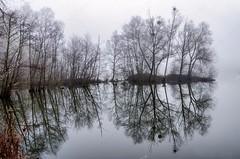 depositphotos_128072078-stock-photo-tranquil-landscape-of-misty-swamp (tanyapavlicapschyrembel) Tags: